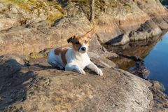 Il cane si trova su una roccia immagine stock