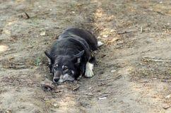 Il cane si trova sulla terra Immagini Stock