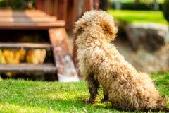 Il cane solo Fotografia Stock