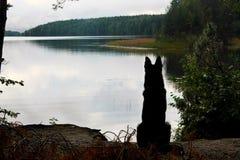 Il cane sta aspettando il proprietario nel lago immagini stock libere da diritti