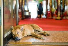 Il cane sta bloccando la entrata Immagini Stock Libere da Diritti