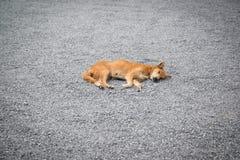 Il cane sta dormendo su struttura di pietra Immagini Stock Libere da Diritti