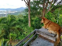 Il cane sta guardando i paesaggi fotografie stock