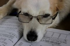Il cane sta leggendo un libro immagine stock libera da diritti