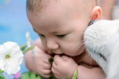 Il cane sta odorando l'orecchio del bambino Fotografia Stock