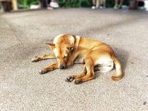 Il cane sta riposando immagini stock libere da diritti