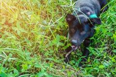 Il cane stava trovando Fotografie Stock