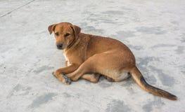 Il cane sul pavimento Fotografia Stock Libera da Diritti