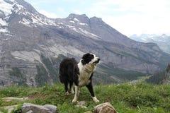 Il cane sulla cima della montagna Immagini Stock