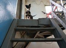 Il cane sulla cima delle scale Fotografia Stock