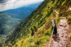 Il cane sulla strada C'è la vista dalla montagna Krakonos e Kozi hrbety alla valle fotografie stock