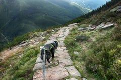 Il cane sulla strada C'è la vista dalla montagna Krakonos e Kozi hrbety alla valle immagine stock