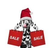 Il cane sveglio con il vestito da festa di Natale sostiene con il sacchetto della spesa Immagini Stock