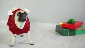 Il cane sveglio della razza un carlino è vestito entro una festa in vestito di una renna e sta accanto ai regali nell'imballaggio video d archivio