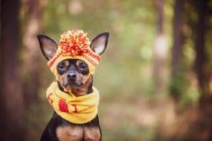 Il cane in una sciarpa ed il cappello in autunno parcheggiano Tema dell'autunno divertente immagini stock