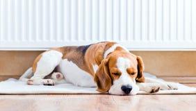 Il cane vicino ad un radiatore caldo Fotografie Stock