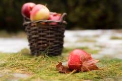 Il canestro con le mele rosse e gialle è sull'erba con neve Una mela è sulla parte anteriore di fotografia stock libera da diritti