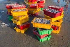 Il canestro del pesce su Hai Beach lungo e camminare ondeggiando i granchi erano du Fotografie Stock