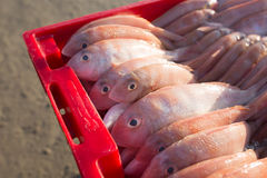 Il canestro del pesce su Hai Beach lungo e camminare ondeggiando i granchi erano du Fotografia Stock Libera da Diritti