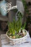 Il canestro di vimini con i fiori della cipolla con un di legno firma dentro il Russo dall'8 marzo Fotografia Stock
