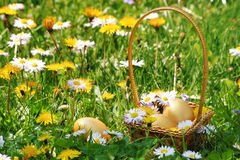 Canestro dorato delle uova di Pasqua Fotografie Stock