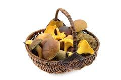 Il canestro in pieno dei funghi commestibili su bianco ha isolato il fondo Fotografia Stock