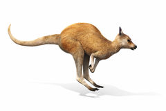 Il canguro che salta su un fondo bianco Immagini Stock Libere da Diritti
