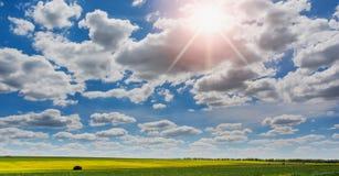 Il canola di fioritura sistema e cielo blu con le nuvole ed il sole Immagine Stock