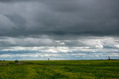 Il Canola pota nell'ambito dell'annuvolamento, Saskatchewan, Canada fotografia stock libera da diritti