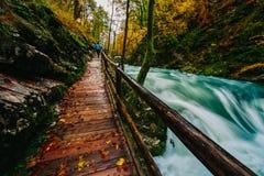 Il canyon famoso con i picchietti di legno, sanguinati, Triglav, Slovenia, Europa della gola di Vintgar Fotografia Stock