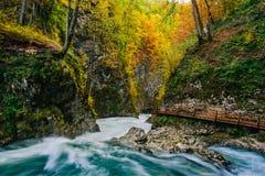 Il canyon famoso con i picchietti di legno, sanguinati, Triglav, Slovenia, Europa della gola di Vintgar Immagini Stock