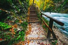Il canyon famoso con i picchietti di legno, sanguinati, Triglav, Slovenia, Europa della gola di Vintgar Fotografie Stock Libere da Diritti