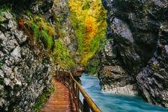 Il canyon famoso con i picchietti di legno, sanguinati, Triglav, Slovenia, Europa della gola di Vintgar Immagine Stock