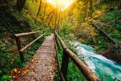 Il canyon famoso con i picchietti di legno, sanguinati, Triglav, Slovenia, Europa di Vintgar Fotografia Stock