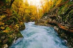 Il canyon famoso con i picchietti di legno, sanguinati, Triglav, Slovenia, Europa di Vintgar Fotografie Stock Libere da Diritti