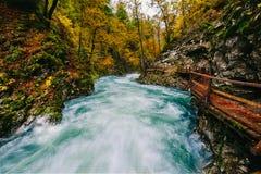 Il canyon famoso della gola di Vintgar con i picchietti di legno fotografia stock libera da diritti