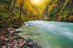 Il canyon famoso della gola di Vintgar, sanguinato, Triglav, Slovenia, Europa Immagini Stock