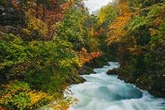 Il canyon famoso della gola di Vintgar, sanguinato, Triglav, Slovenia, Europa Immagine Stock