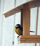Il capezzolo con piume gialle sta sedendosi all'alimentatore che guarda indietro Fotografie Stock