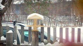 Il capezzolo mangia dall'alimentatore nell'inverno stock footage