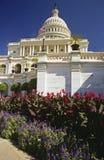 Il capitale con i fiori Fotografia Stock