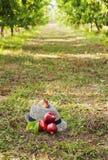Il cappello e la pesca rossa dell'agricoltore sulla terra Fotografia Stock