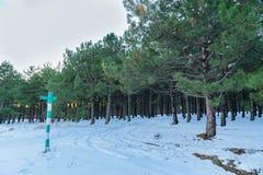 Il cartello mostra in profondità nell'alta abetaia innevata Russia, Stary Krym Fotografie Stock