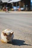 IL CAT NELL'INVERNO Immagini Stock Libere da Diritti