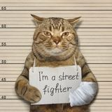 Il cattivo gatto è un combattente di via fotografie stock libere da diritti