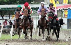 Il cavaliere del cavallo da corsa si è scontrato la velocità in cavallo tradizionale Immagine Stock