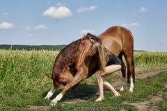 Il cavaliere della ragazza sta accanto al cavallo nel campo Il ritratto di modo di una donna e le giumente sono cavalli nel villa immagini stock libere da diritti