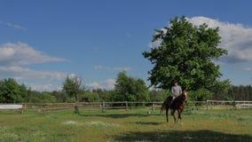 Il cavaliere nella guida del casco sul cavallo sul prato stock footage
