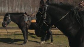 Il cavaliere sta cominciando montare un cavallo video d archivio