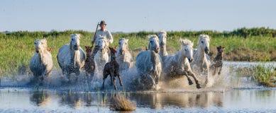 Il cavaliere sul cavallo di Camargue galoppa attraverso la palude Fotografia Stock Libera da Diritti